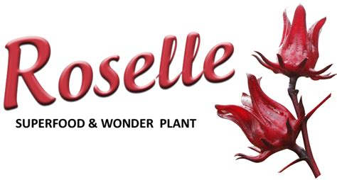 What is Roselle? | Herbanext Laboratories Inc