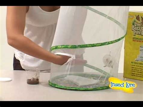 Insect Lore Butterfly Pavilion Instructions - YouTube