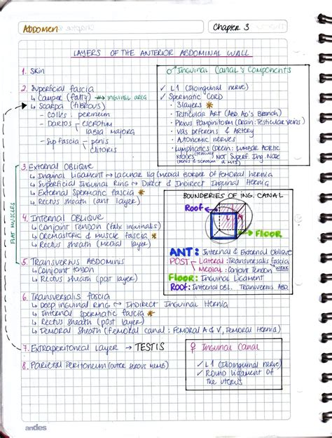 My Notes for USMLE — Layers of Anterior Abdominal wall