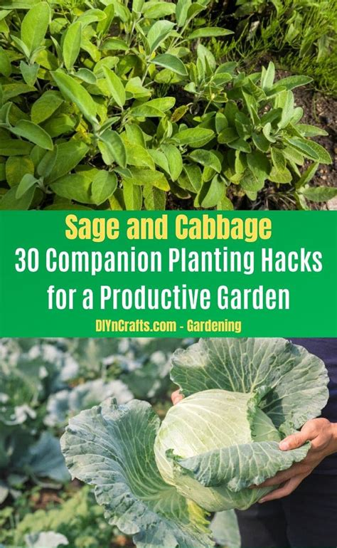 30 Companion Planting Pairs for a Productive Garden - DIY