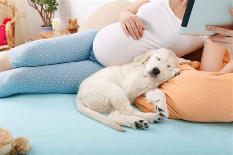 Preparing Your Dog for the Arrival of a New Baby | Pets4Homes