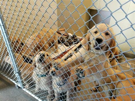 Over 100 dogs and puppies seized from 'squalid' conditions