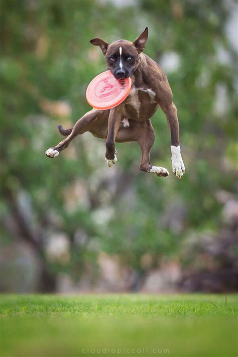 20 Pictures Of Flying Dogs That Will Give You Life