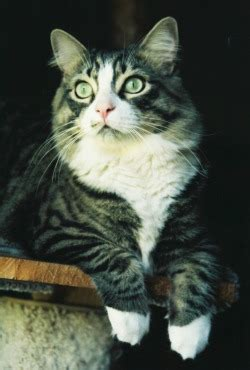 images - my furry children - Tracy Ahrens