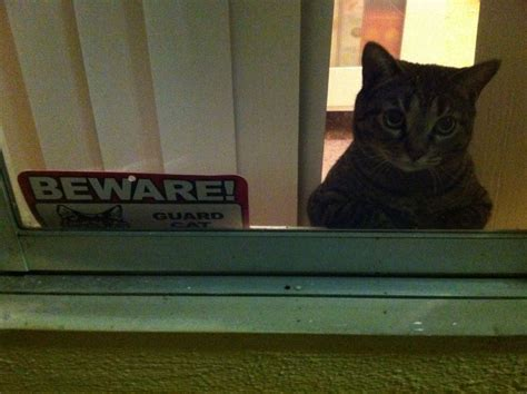 20 Cats Who Definitely Take Their House Guarding VERY