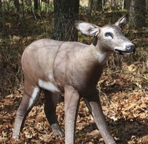 8 Mistakes Hunters Make Every Year During the Rut