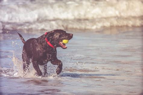 Ideas Of Ball Made Specifically For Dogs