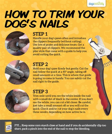 A Stress-Free Way For Trimming Your Dog's Toenails