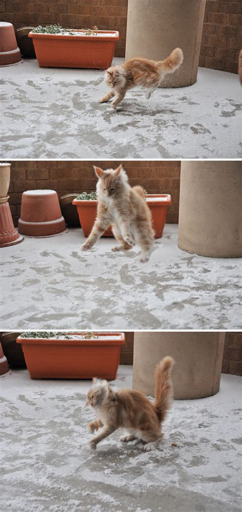 13 Animals That Experienced Snow For The First Time, And