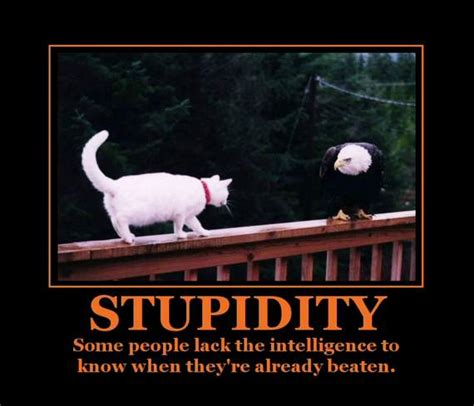 Stupidity Takes Another Level ~ Unbelievable Stories From