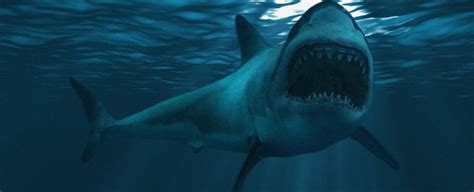 The Creature That Killed Off The Giant Megalodon Might