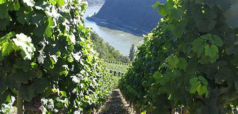 A self-guided walking holiday in the Rhine Valley with On