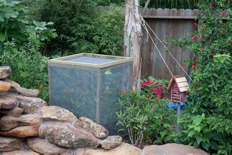 13 best images about Butterfly/caterpillar enclosures on